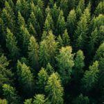 Kasvava metsä